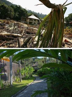 Tsunami in Indonesia and Thailand 10 Years Later: before and After