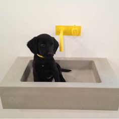 Found this gem in the Lowinfo archive. Pitch from the Kast by Lowinfo range (Puppy not included) www.lowinfo.com/kast-concret-basins #concrete #design #interiors #puppy