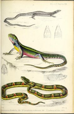 pt. 27 (1859) [Plates] - Proceedings of the Zoological Society of London. - Biodiversity Heritage Library