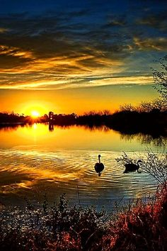 Canadian geese sunset, Arizona, USA