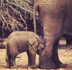 I'm hope you had a great Sunday by Adopt An Elephant, Elephant Walk, Elephant Love, Animals Images, Animals And Pets, Baby Animals, Cute Animals, Wild Animals, Save The Elephants
