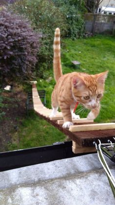 xford University PhD student Tariq Khoyratty constructed the homemade ladder for ginger tom Nelson to run up and jump through an open upstairs window. Sly.