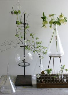 Scientific glassware and delicate botanicals make a beautiful combination | Science themed decor for your home