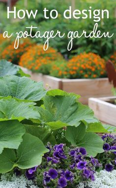 How to design a potager garden. French potager style mixes growing vegetable crops with herbs and edible flowers, as well as decorative companion planting. The result is a pretty, stylish veg plot garden.: