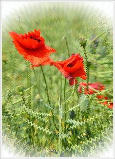 Fotohrátky 6. - Irena Simunekova (blog.sme.sk) Martin Luther, Plants, Blog, Fotografia, Blogging, Plant, Planets