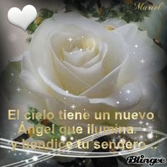 Love Messages, Spanish Quotes, Good Morning Quotes, Christian Quotes, Grief, Girl Cartoon, Merry, Rose, Birthday