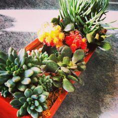 Wooden box moon cacti and succulents garden