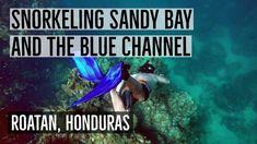 Roatan Breathtaking Snorkeling - Sandy Bay and Blue Channel - YouTube
