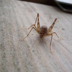 Lovely Black Crickets In Basement