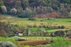 Foto: Florin Avramescu Romania, Vineyard, Golf Courses, Outdoor, Outdoors, Vine Yard, Vineyard Vines, Outdoor Games, The Great Outdoors