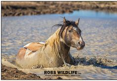 Cooling off . . #Featuremyhorse #horselover #wildhorse #horse #horses #instaadventure #wildlifephotography #animal #horseplanet #horsesofinstagram #wildhorsepc #utahphotographer #horsepic #horsegram #horseplay #equinelife #equinephotography #equine #equineart #equine_feature #equestrianphotography #equestriansofinstagram #equestrian #equestrianstyle #worldbesthorses #horses_addicted #equestrianphotography