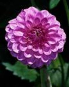 Best Annuals that Grow from Seed Well