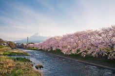 เที่ยวญี่ปุ่นช่วงซากุระด้วยตัวเอง 11 วัน 6 เมือง  http://pantip.com/topic/32527559