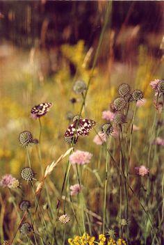 Butterflies are self propelled flowers. ~R.H. Heinlein