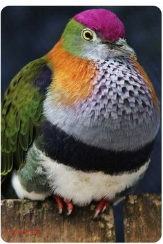 Solve bird of many colors (I'm calling him Joseph) jigsaw puzzle online with 35 pieces Pretty Birds, Beautiful Birds, Animals Beautiful, Rare Birds, Exotic Birds, Exotic Pets, Tropical Birds, Colorful Birds, Animals And Pets
