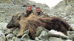 New Zealand Tahr Hunt Spring 2014 - Tom Sallows