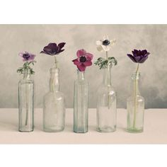 Showcasing a row of flowers in glass vases, this lovely canvas print brings feminine appeal to your living room or master bath.  Pro...