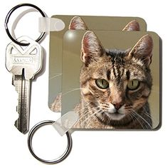 kc_28164_1 Taiche Photography - Cat Tabby Cat Outside - Key Chains - set of 2 Key Chains 3dRose http://www.amazon.com/dp/B005II3M9A/ref=cm_sw_r_pi_dp_YEqAwb1TNW2F9