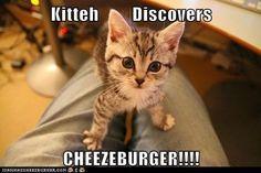 Kitty has the cuteness Meme   Slapcaption.com