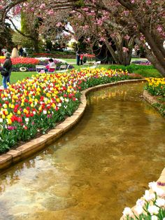 Bowral Gardens during tulip time - Long Weekend Travel: 5 Easy Trips from Sydney - The Trusted Traveller