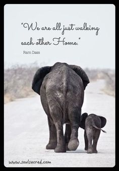 We-are-all-just-walking-each-other-home.1.jpg (526×752)