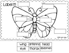 All About Insects: Math, Literacy, and SO Much More!