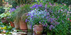 I HAVEN MED HAVEFOLKET - HAVEFOLKET  and the garden in Hune