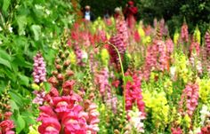 One of the many flower beds at Heligan in bloom
