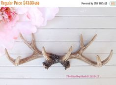 ON SALE Large Antler Wall Rack/ Large Wall Antler by Theshabbyshak