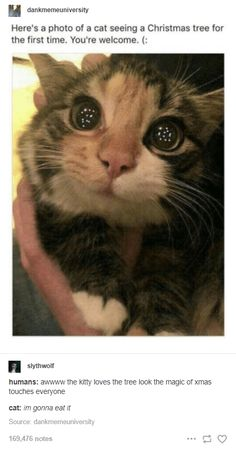 Funny Animal Jokes, Cute Funny Animals, Funny Cute, Cute Cats, I Love Cats, Funny Kitties, Cute Stories, Cute Memes, Cute Little Animals