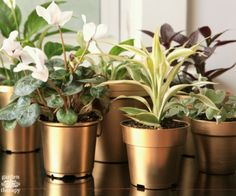 brilliant shine on these DIY gold painted pots