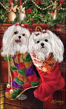 --Maltese - Stocking Stuffers