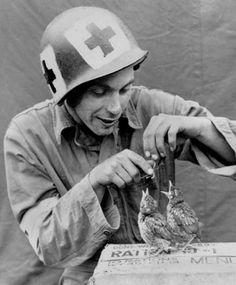 World War II medic feeding baby birds