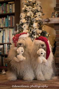 decorating the Christmas tree Christmas Animals, Christmas Cats, Cute Puppies, Cute Dogs, St Bernard Puppy, Holiday Hats, Bearded Collie, Old English Sheepdog, Christmas Wonderland