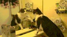 Cat becomes self aware