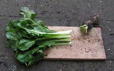 24) Witlof kweken – sjeftuintips Compost, Cabbage, Vegetables, Veggie Food, Cabbages, Vegetable Recipes, Veggies, Brussels Sprouts, Composters
