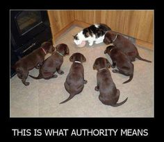 What authority means