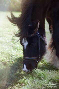Manche Augenblicke, so unglaublich zerbrechlich, so schnell vergehend, sodass wir sie kaum begreifen. Manchmal habe ich das Gefühl, dass wir diese Momente, in denen wir einfach zusammen sind, uns nichts belastet, nichts bedrückt gar nicht mehr sehen und nicht wahrnehmen… Von einem Lufthauch davon getragen, dabei sind sie doch so wertvoll! Das sind die Dinge, an die mich Pferde ganz persönlich erinnern. #pferd #pferdefotografie Draft Horses, Horse Pictures, Horse Love, Beautiful Horses, Live, Animals, Beauty, Horses, Inspiring Pictures