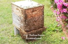 learn how to start keeping bees for yourself