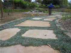 Dymondia margaretae - Silver Carpet  This would perform great between stones in the planting strip.