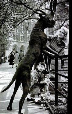 Jane Mansfield & Her Great Dane,Daughter & Chihuahua