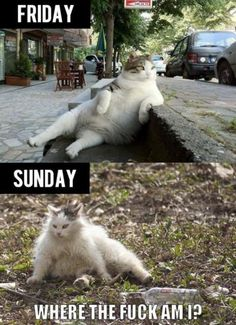 Weekends.