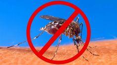 Solutii pentru a tine insectele departe de casa