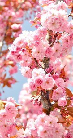 Image de flowers and pink Beautiful Flowers Wallpapers, Beautiful Rose Flowers, Wonderful Flowers, Beautiful Nature Wallpaper, Flowers Nature, Pretty Flowers, Pink Flowers, Frühling Wallpaper, Spring Wallpaper