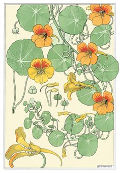 Art Nouveau Nasturtium Print by Eugene Grasset. Printed on good quality papers size A3 or A4 ..Buy 3 get 4th FREE..