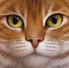 Bralt Bralds - Cara de gato - Animals Of All Kinds: for Watercolor Pretty Cats, Beautiful Cats, Cute Cats, Animals Beautiful, Cat Eyes Drawing, Blog Art, Image Chat, Super Cat, Photo Chat