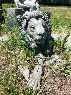 Awesome lion, Coupeville...