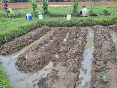 Fertilizer trial
