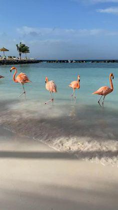 Travel photography tips #travel #photography #tips Beautiful Photos Of Nature, Beautiful Nature Wallpaper, Beautiful Places To Travel, Beautiful Birds, Animals Beautiful, Aruba Flamingos, Flamingo Beach Aruba, Pig Beach Bahamas, Hawaii Beach