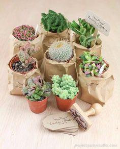 Lembrancinha útil ou decorativa? 1 Succulent Pots, Succulents Garden, Garden Plants, Indoor Plants, Planting Flowers, Greenhouse Plants, Mini Cactus, Cactus Pot, Happy Party